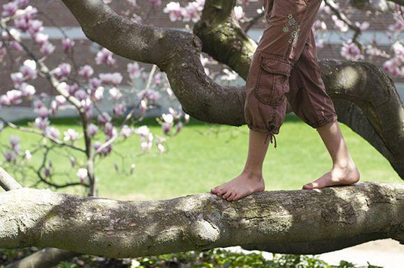 barefoot-tree