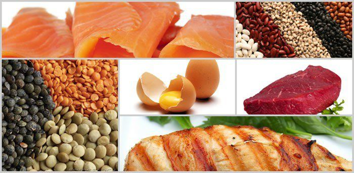 proteins-fat-loss