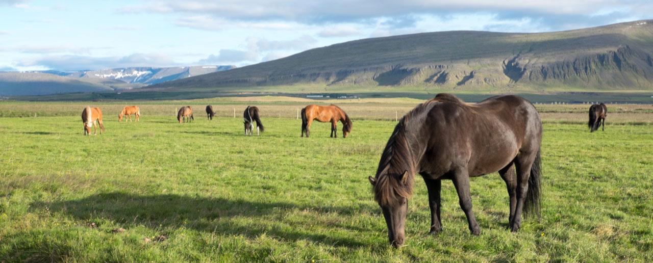 <b>Island – Krása stíhá nádheru</b>