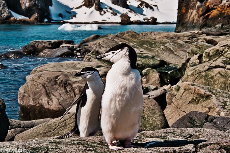 Tuün†k uzdiükovÏ na Antarktidÿ