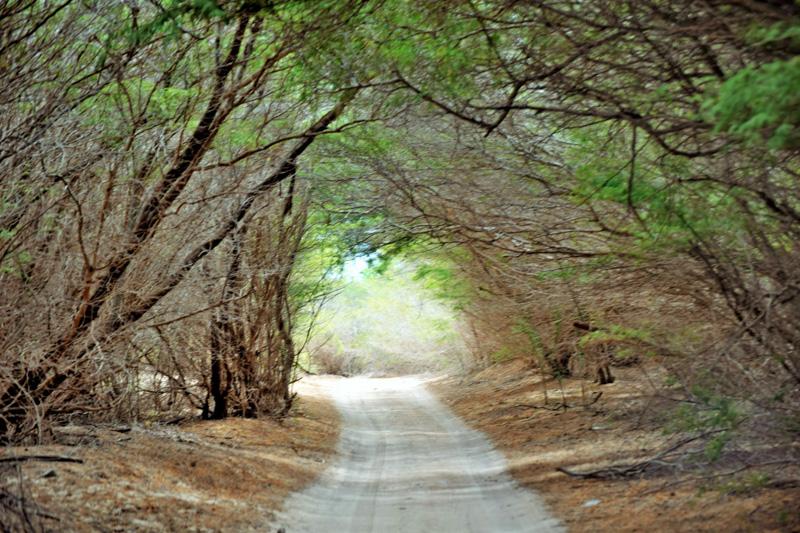 Tajuplná cesta směrem k pobřeží Boa Esperanca (Kapverdy)