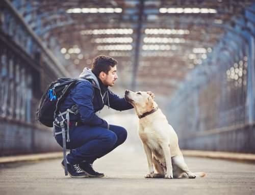 Máte psa a plánujete s ním cestovat letadlem? Jde to, ale obrňte se trpělivostí