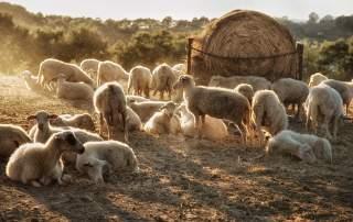 <b>Dobrovolnictví na farmě: ubytování a strava zdarma, nezapomenutelné zážitky v ceně</b>