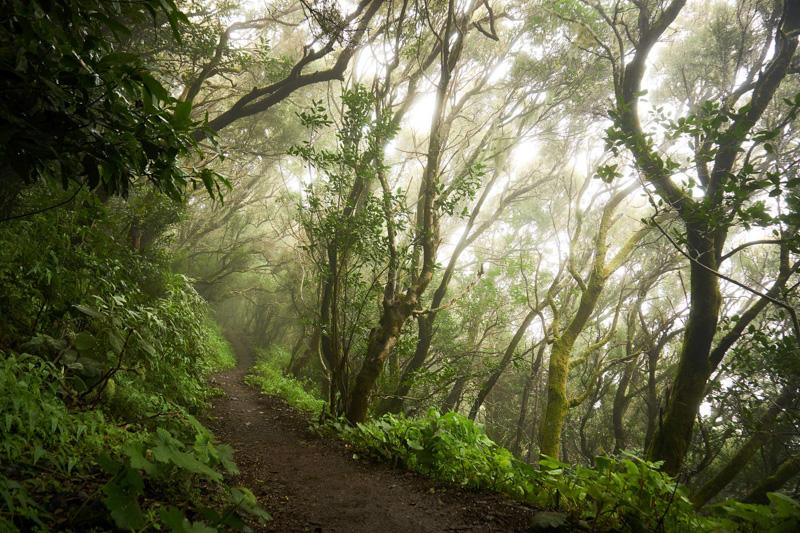 Trail mezi Mascou a Santiago del Teide @Matúš Ficko