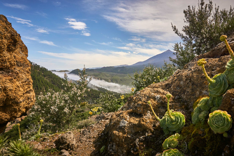 Bujná vegetace a Teide @Matúš Ficko