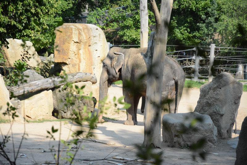 Před návštěvou turistické atrakce, kde jsou zapojená zvířata, si vyhledejte objektivní informace o tom, jak se k nim chovají