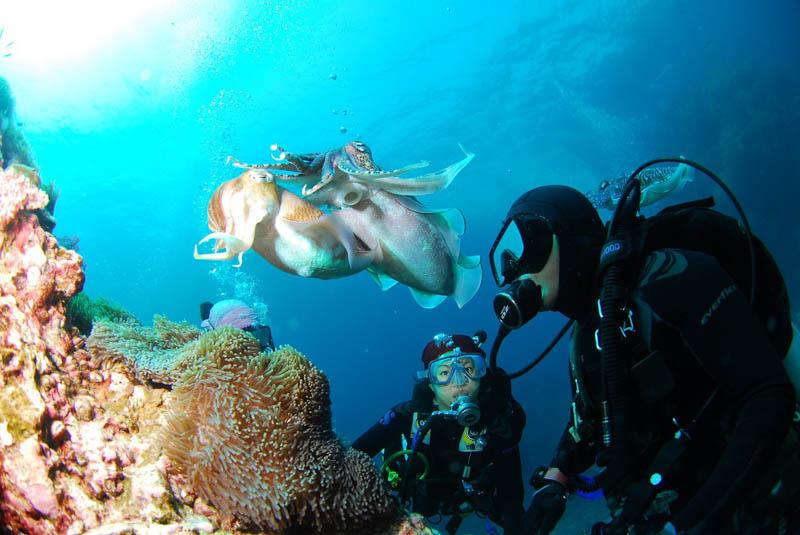 potápění cestovní pojištění