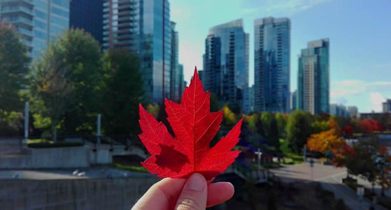 Kanadský symbol: javorový list