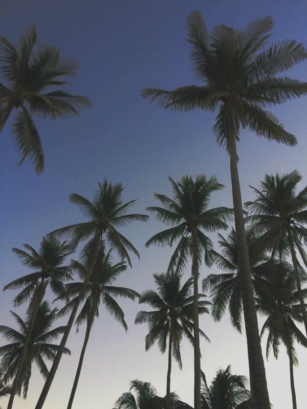el salvador palmy
