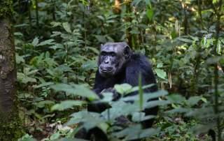 průvodce kongo