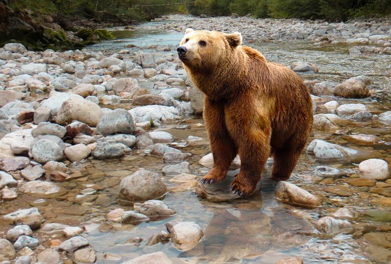 napadení medvědem
