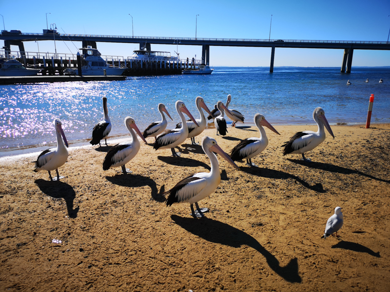 Phillips Island austrálie
