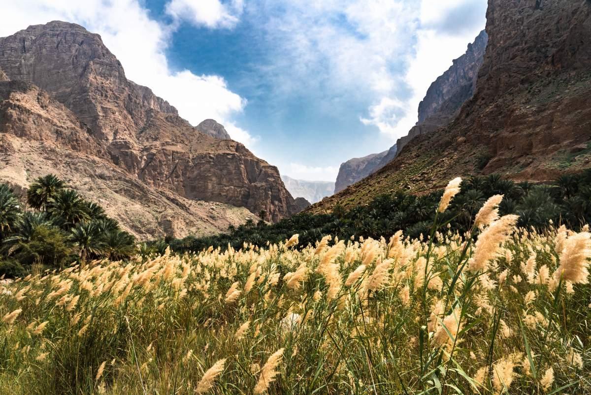 <b>Pouštní Liška: O životě, práci a cestování v Kuvajtu i Ománu</b>