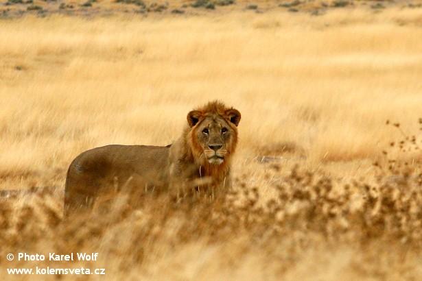 namibie IMG_922namibie 7